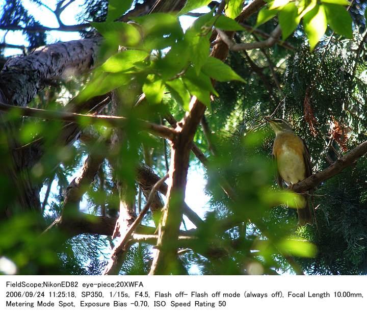 2006.9.24 秋ヶ瀬公園・子供の森_c0062451_18413974.jpg