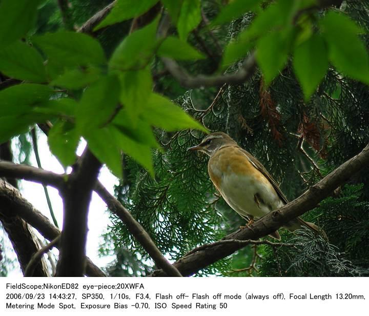 2006.9.23(3) 秋ヶ瀬公園・子供の森_c0062451_5155396.jpg
