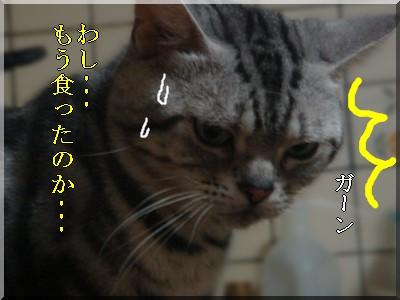 b0078073_1438237.jpg