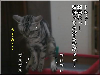 b0078073_1442385.jpg