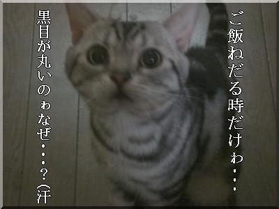 b0078073_1449320.jpg
