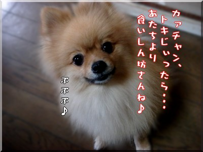 b0078073_1574089.jpg