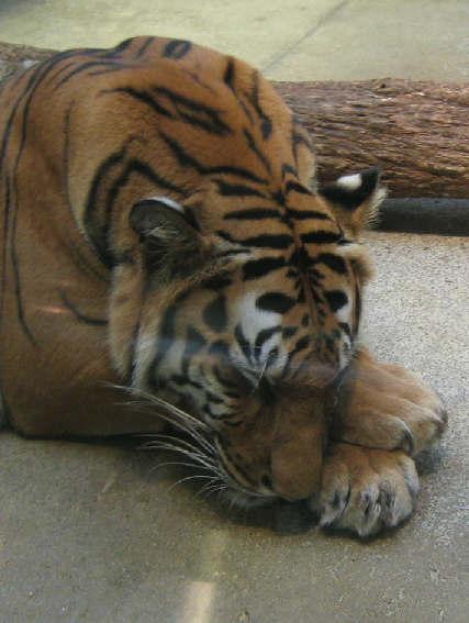 いしかわ動物園_d0047885_0211676.jpg