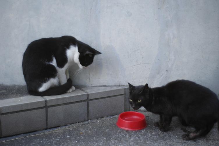 CATS2_f0042194_14394718.jpg