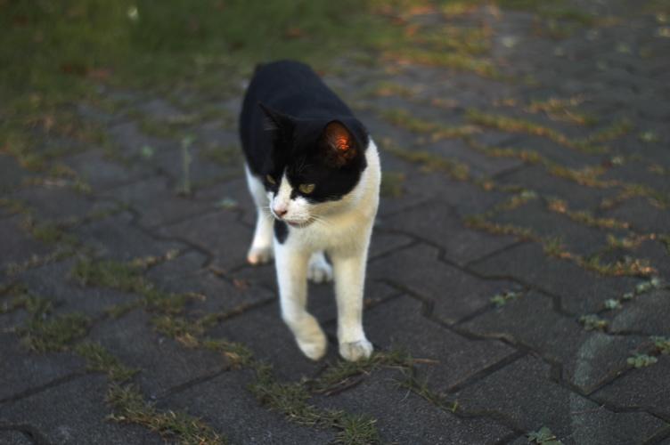 CATS3_f0042194_17551673.jpg