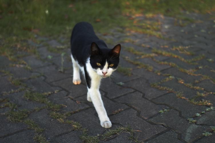 CATS3_f0042194_1755515.jpg