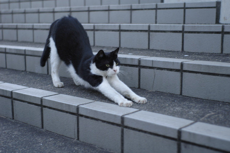 CATS4_f0042194_214324.jpg