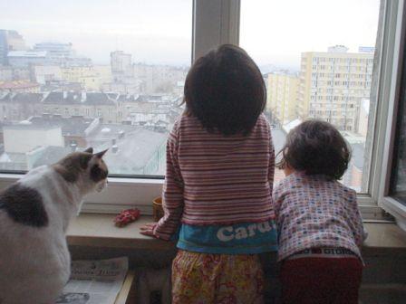 窓からの景色を見る二人とチョロ_b0017215_17238.jpg
