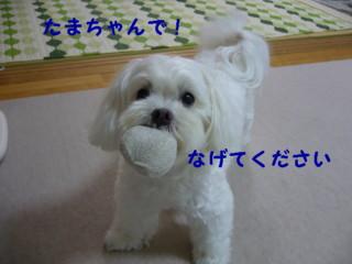 f0005727_16102732.jpg