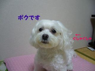 f0005727_1625740.jpg