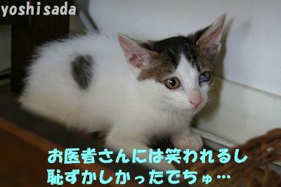 f0063729_1512112.jpg