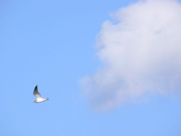 カモメと雲_e0088233_21123287.jpg