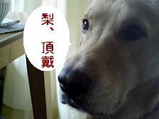 f0073750_1125514.jpg