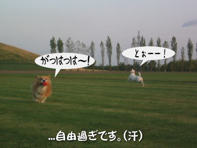 b0105157_2014086.jpg