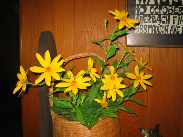 黄色い花は未完成_a0030594_2283587.jpg