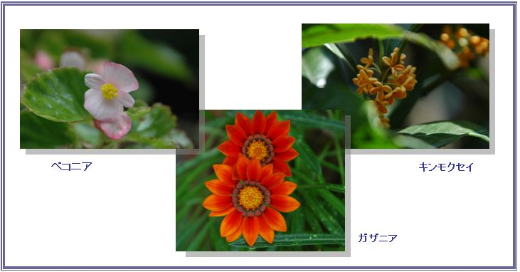 夏の名残_c0051105_0582777.jpg
