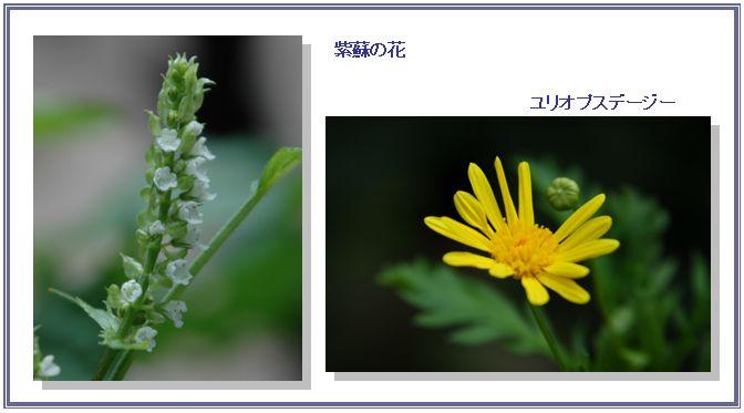 夏の名残_c0051105_05853100.jpg