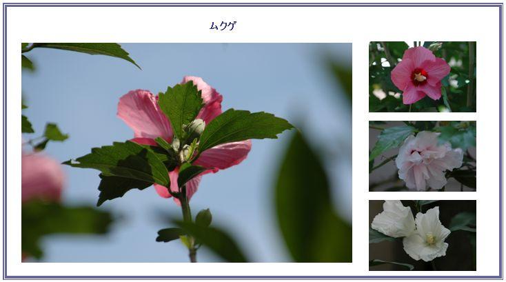 夏の名残_c0051105_0594042.jpg