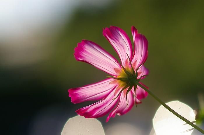 d0043136_21493287.jpg