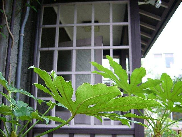 京都YWCAサマリア館_c0094541_13591663.jpg