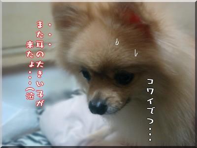 b0078073_1933210.jpg