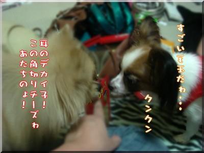 b0078073_19333759.jpg