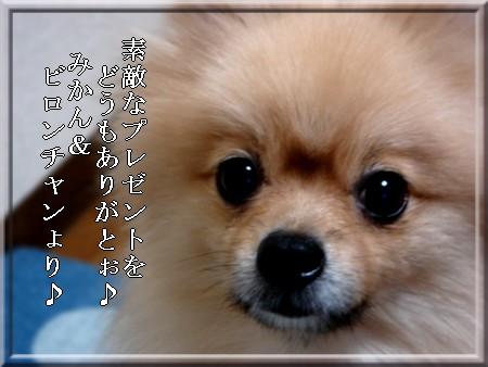 b0078073_1948366.jpg