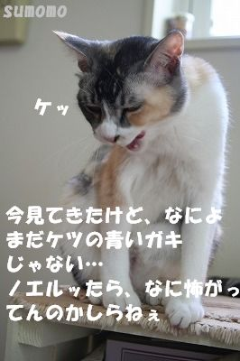 f0063729_15311151.jpg