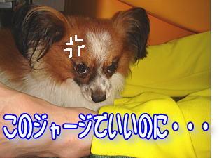 f0011845_021150.jpg