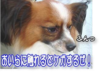 f0011845_0222945.jpg