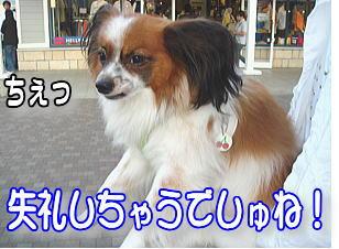 f0011845_0224367.jpg
