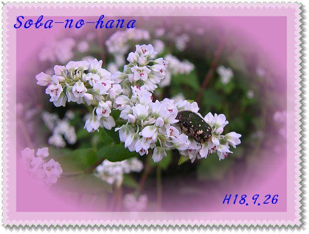 d0041158_1442758.jpg