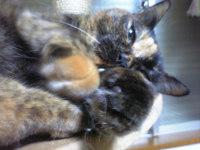 今日の治療と食事~猫草入り軟らかウンチくん_d0053201_1542163.jpg