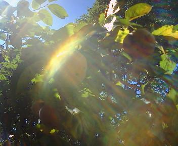幸せ、快晴日和。 「光と風の音楽」_b0032617_124203.jpg