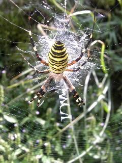 蜘蛛は苦手ですか?_f0099147_0452299.jpg