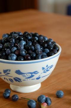 Blueberry Pick_f0057564_046228.jpg