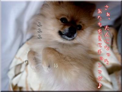 b0078073_22115460.jpg