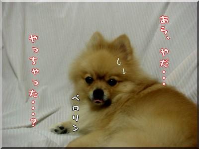 b0078073_22173248.jpg
