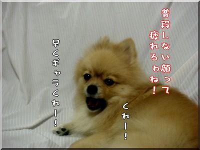 b0078073_22181149.jpg