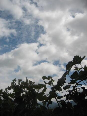 天候にも恵まれ_b0016474_234951.jpg