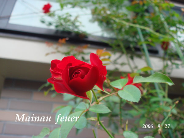f0057006_13235288.jpg