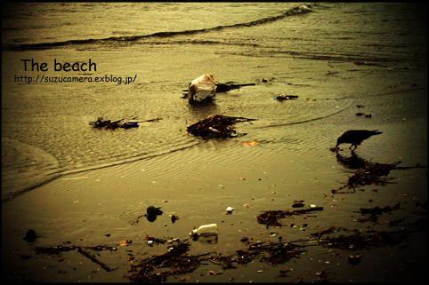 The beach_f0100215_1135444.jpg