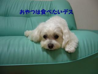 f0005727_16155740.jpg