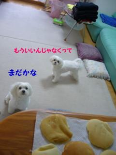 f0005727_16221159.jpg