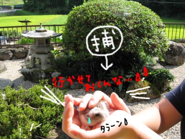 f0097734_812335.jpg