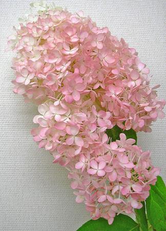 9月29日 アキイロミナヅキ_a0001354_22253782.jpg