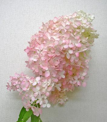 9月29日 アキイロミナヅキ_a0001354_22255370.jpg