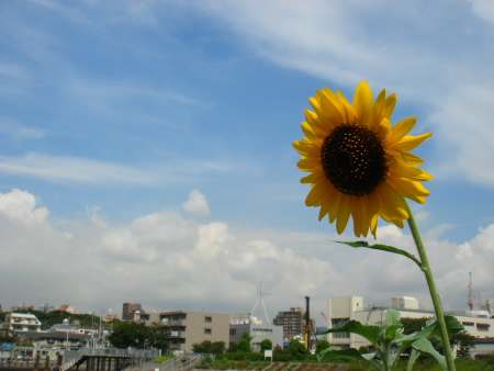夏の終わりのちょっと前_c0006767_8341189.jpg