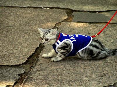散歩する子猫_f0030085_22255879.jpg