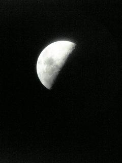 今夜は半月ですね♪_f0099147_2385939.jpg